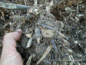 DIY Organic Mulch - DIY Ramial Chipped Wood - Ramial wood chip - Decorative mulch - RCW - Mulching