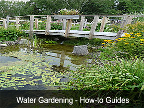 Water Gardening Projects DIY Instructions - Gardening association - Gardens USA